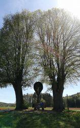 Der-Zwillingslindenbaum---Jetzt-wächst-zusammen-was-zusammen-gehört-Herr-Barth